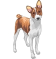 hunting dog Basenji breed vector image vector image