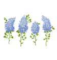 set of lilac flowers vector image vector image