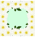 white mum chrysanthemum flower border vector image vector image