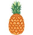 ananas vector image