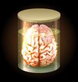 brain in jar vector image vector image