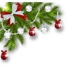 Christmas card Green branches of a Christmas tree vector image vector image