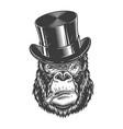 gorilla head in monochrome style vector image