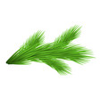 green lush spruce branch isolated on white vector image vector image