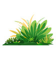 jungle plant composition isolated vector image vector image