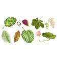 tropial plants set vector image