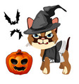angry cat in hat witch bares his sharp teeth vector image vector image