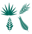 tropical palm tree branches vector image vector image