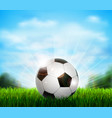 white and black soccer ball on the green glade vector image