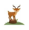 cute deer animal in bole wood tree vector image