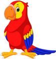 cute macaw cartoon vector image