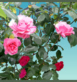 painted bush with pink and light pink roses vector image