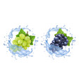 red and white table grapes in water splash vector image