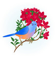 small songbirdon bluebird thrush vector image