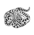 snake anaconda animal sketch vector image vector image