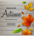 autumn sale banner with colorful frame vector image