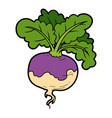 color vegetables turnip vector image vector image