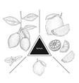 set of fruits lemons on a branch lemon flower and vector image vector image