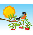 branch of rowanberry with ripe berry vector image vector image