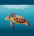 cartoon sea turtle swimming in ocean vector image