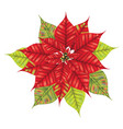 christmas star flower vector image