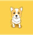corgi puppy vector image