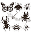 set insects isolated on a white background vector image