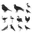 types of birds black icons in set collection for vector image
