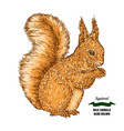 forest animal squirrel hand drawn colored sketch vector image