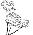 bouquet roses vector image vector image