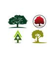 oak tree template set vector image vector image