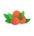 ripe persimmons with green leaves icon vector image vector image