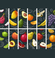 set fruits whole half and slice vintage vector image vector image