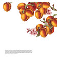 background with hand drawn peach branches vector image vector image