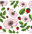 seamless pattern of flowering of dog rose with vector image vector image