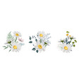 set chamomile bouquets vector image vector image