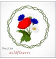 white background with chamomile vector image vector image