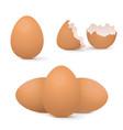 chicken eggs whole and broken vector image