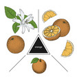 set of fruits whole orange slices and orange vector image vector image