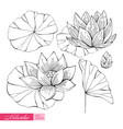 lotus hand-drawn in monochrome black and white vector image