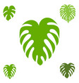monstera icon collection vector image