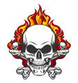 skull in flame vector image vector image