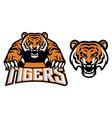 crawling tiger vector image vector image