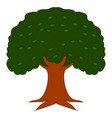 big oak tree on white background vector image