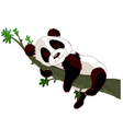 panda sleeping on a branch vector image vector image