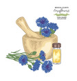 cornflowers with mortar and glass bottle of vector image