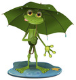 Frog with a green umbrella vector image vector image