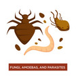 fungi amoebas and parasite infection and disease vector image vector image