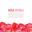 rose petals border vector image vector image