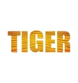 Tiger icon Animal text design graphic vector image